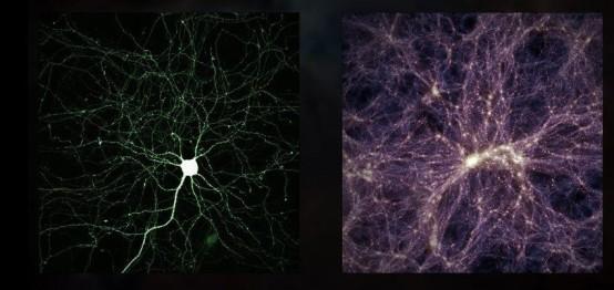 Brain cell (L), Universe (R)